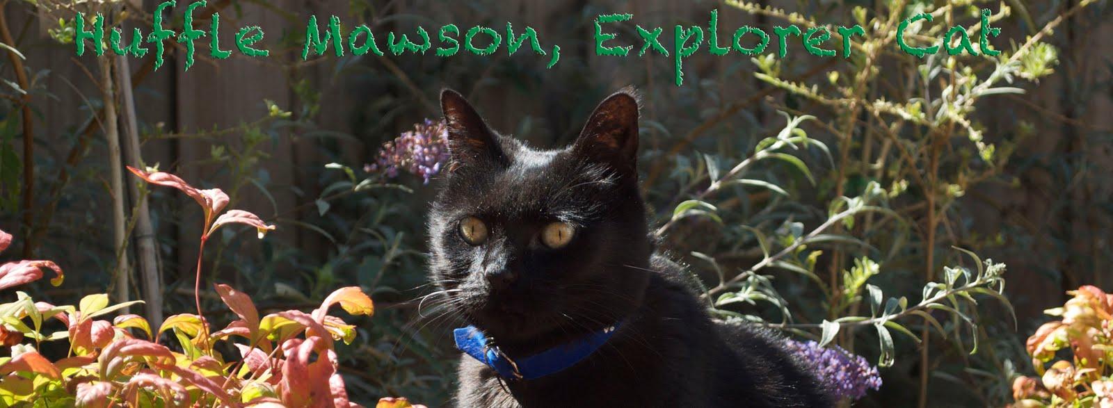 Huffle Mawson, Explorer Cat